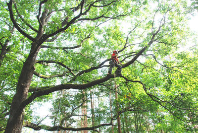 Pohyb v koruně pro geocaching