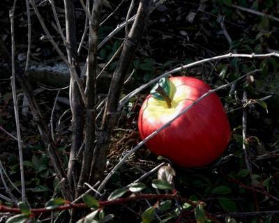 Geocache jablko - komplet včetně microcache - 3